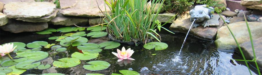 Créer son premier bassin de jardin