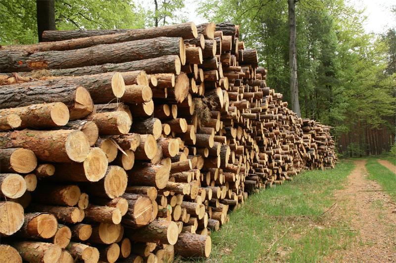 Almateon s'évertue à proposer des produits issus d'une exploitation durable des forêts
